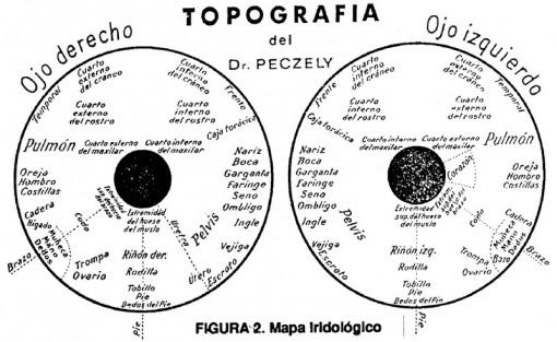 figura-2-mapa-iridologico-topografia-dr-peczely