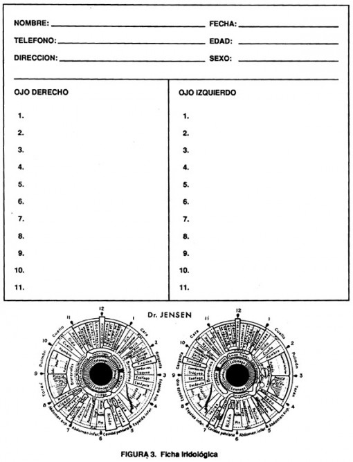 figura-3-ficha-iridologica-dr-jensen