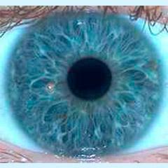 iridologia-iris-flor-2