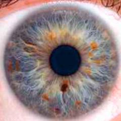 iridologia-iris-punta-de-lanza-1